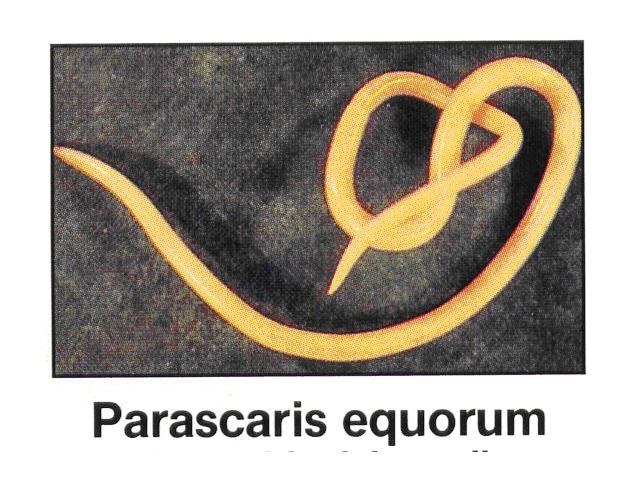 Parassiti e i loro sintomi