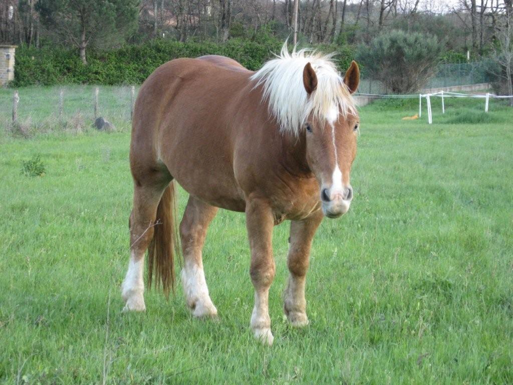 Razze per gli attacchi i norici for Cavalli bolzano