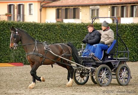 Mobili cavalli bassano ako with mobili cavalli bassano for Cavalli arredamenti civezzano tn